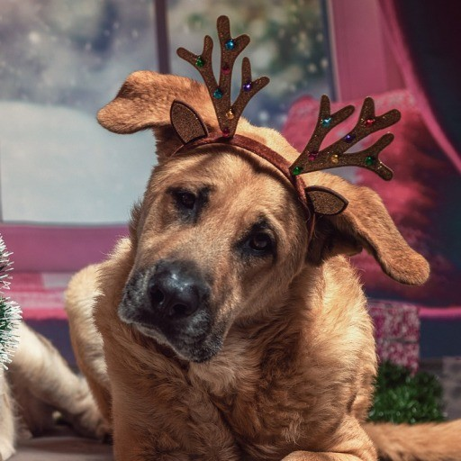 Diademas navideñas